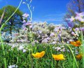 Equinozio di primavera: ecco quando e cosa accade