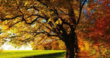 Potature criminali: tuteliamo i nostri amici alberi